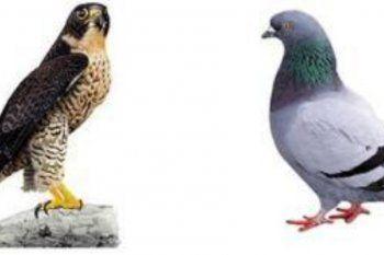 Clarín parece optar por los halcones de Juntos por el Cambio en detrimento de las palomas representadas por Horacio Rodríguez Larreta