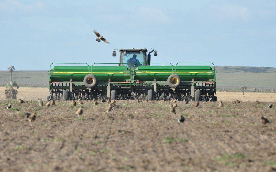 Buenas perspectivas para el cultivo de trigo, que podría crecer hasta un 23% en los próximos diez años