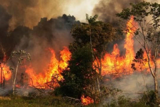 #prayforamazonas: en las redes los famosos se suman al pedido de ayuda por el incendio que conmueve al mundo
