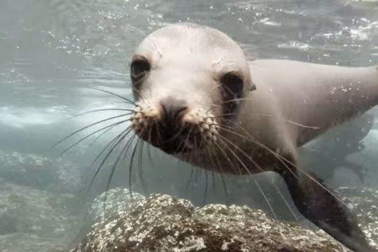 defensores de animales se manifestaran en el aquarium contra el traslado de diez lobos marinos