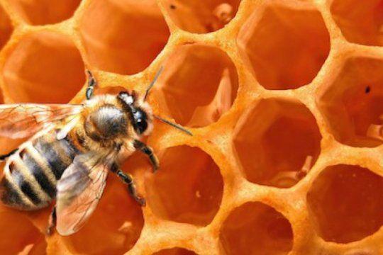 cientificos marplatenses realizaron un descubrimiento que podria favorecer al sector apicola