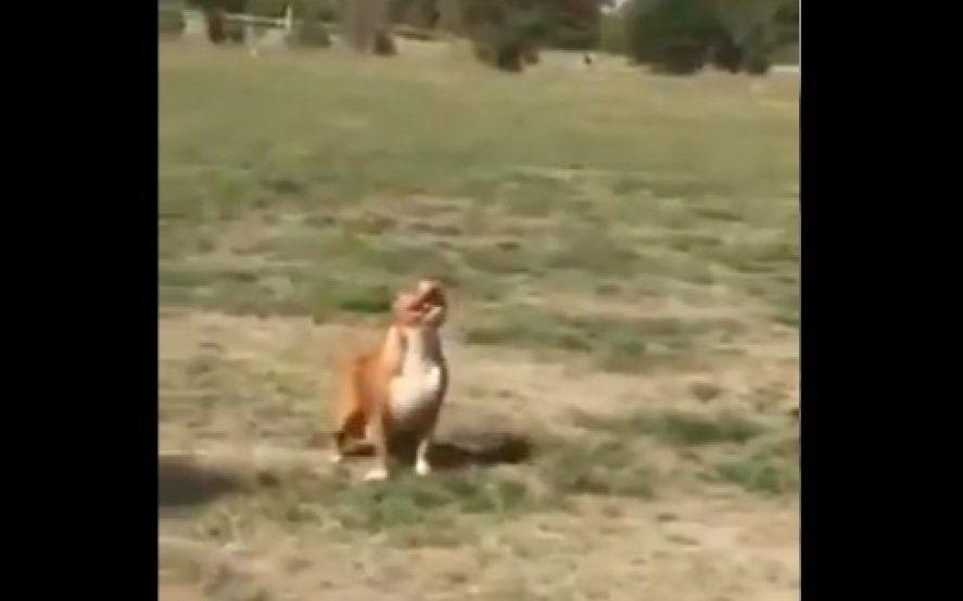 """""""Existen dos clases de perros"""": el video viral que muestra las notables reacciones caninas ante un mismo estímulo"""