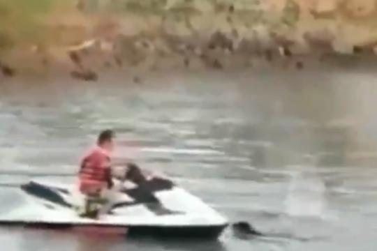 indignante: embistio a un perro con una moto de agua y genero repudio en las redes