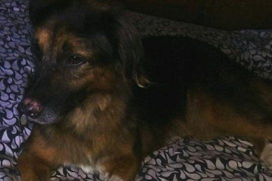 la desesperada busqueda de mona, una perra que se perdio antes de que su avion despegara de ezeiza