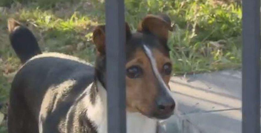 Córdoba: en un robo, defecaron y se limpiaron con el perro
