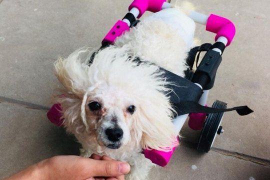 fabrican sillas de ruedas con impresoras 3d para perros con dificultades motrices
