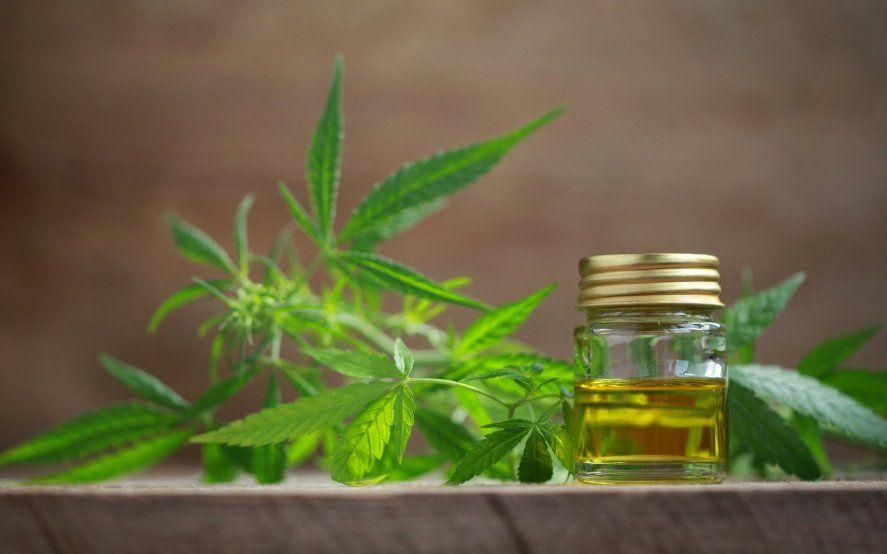 Cannabis para no sufrir: Prisión domiciliaria por cultivar y producir aceite para sus hijos