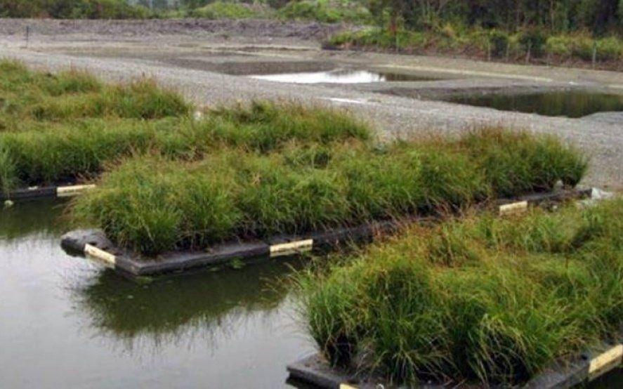 Humedales bio-electrónicos: El invento marplatense parar depurar aguas residuales