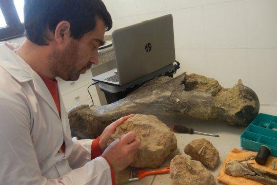 encuentran restos de reptiles, gliptodontes, perezosos y mas animales prehistoricos en miramar