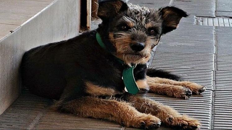 Cachirulo, el perro que inspiró la escultura en Bahía Blanca