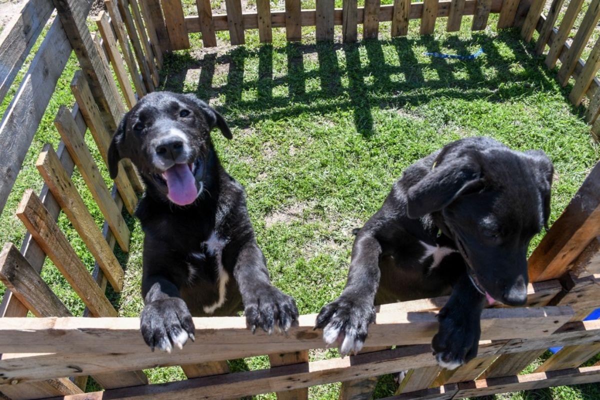Los perros son entrenados para asistir a personas con discapacidades