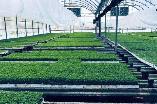 Un equipo de la UNLP creó un sistema para mejorar la producción de cultivos bajo cubierta.