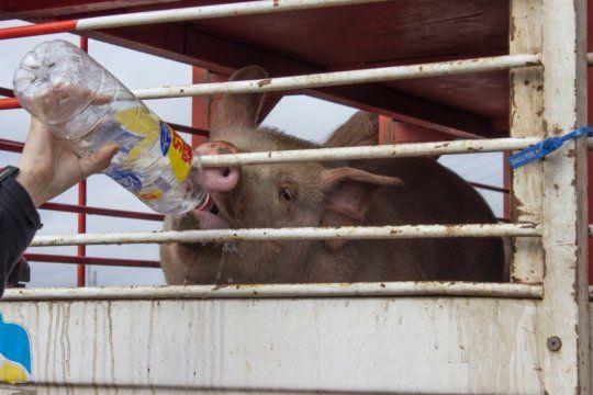 Foto: Buenos Aires Animal Save - Vigilia en Marcos Paz