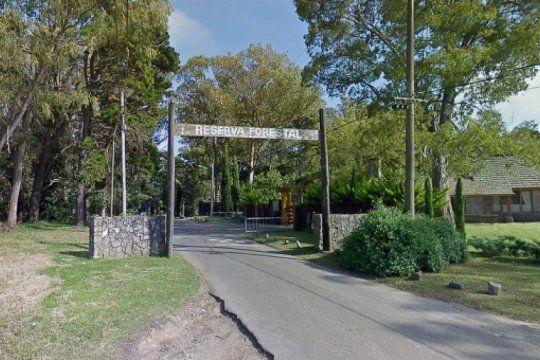 preocupa la tala indiscriminada de arboles en el bosque peralta ramos