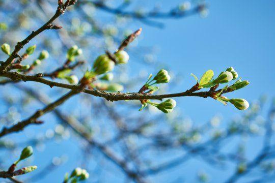 La primavera comenzará oficialmente este martes a las 10:30
