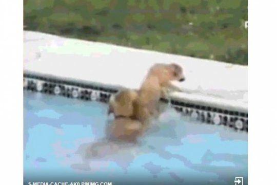 solidaridad animal: un perro ayudo a que un cachorro no se caiga a la pileta y se volvio viral