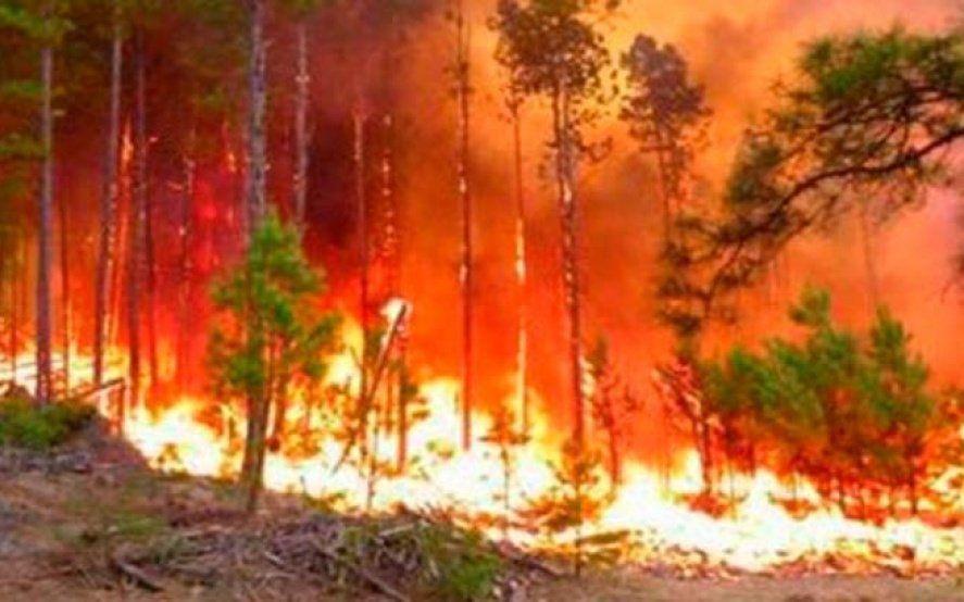 Los 8 consejos para reducir los riesgos de un incendio forestal ante la llegada de altas temperaturas