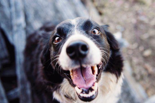 ¿que hago con el perro en vacaciones? enterate como funcionan y cuanto salen las guarderias caninas