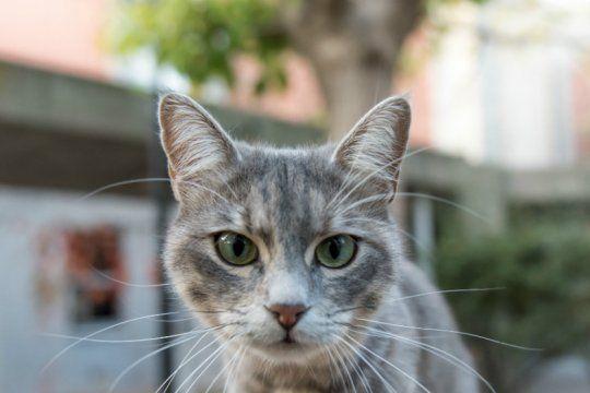 mascotas en cuarentena: como actuar ante el estres y la ansiedad de nuestros gatos