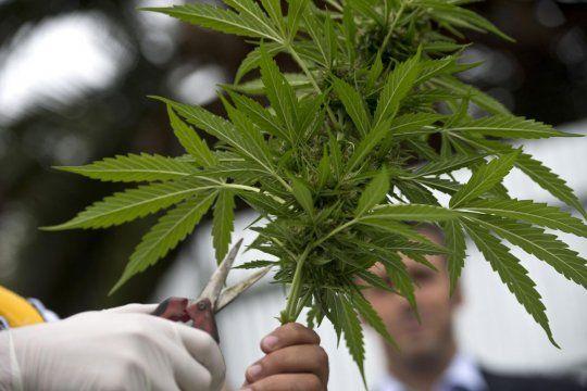 Tenía 19 años y lo mataron por robar una planta de marihuana