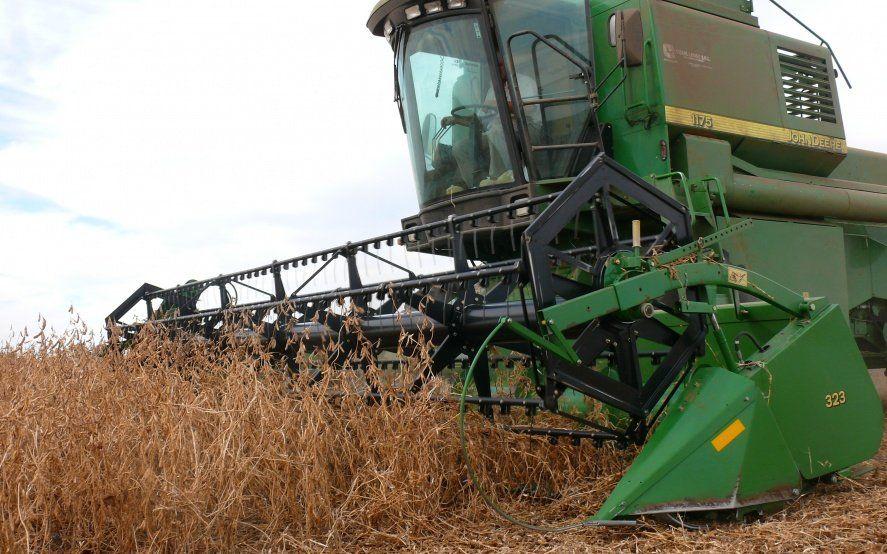 Pese a la falta de agua, pronostican que la cosecha de soja y maíz no sufriría pérdidas de rendimiento