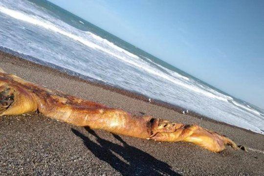La criatura apareció en una zona pesquera donde había pocas personas