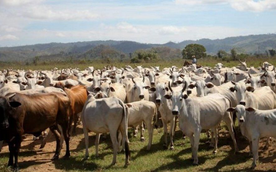 """Un caso de enfermedad de """"vaca loca"""" detectado en Brasil sacude el negocio ganadero en todo el mundo"""
