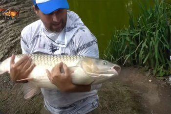 El Loco de la carpa pescó un pez gigante en el Lago de La Plata