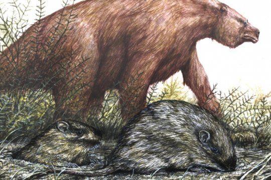 hallazgo historico en miramar: rescataron una rata espinosa fosil de mas de 400 mil anos de antigüedad