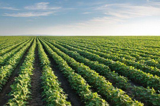 La soja se desplomó más de US$ 40 en Chicago