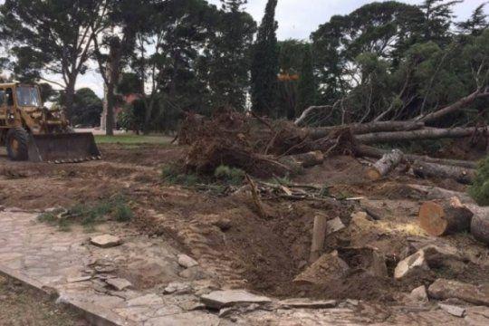 triste: asi eliminaban mas de 100 arboles historicos de la plaza ernesto tornquist