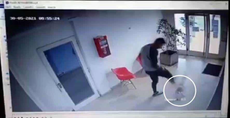 La agresión al perro caniche quedó registrada en las cámaras de seguridad