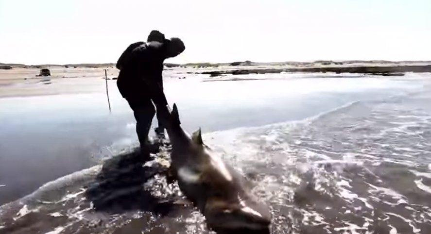 Pescaron un tiburón de más de 2 metros en Arenas Verdes