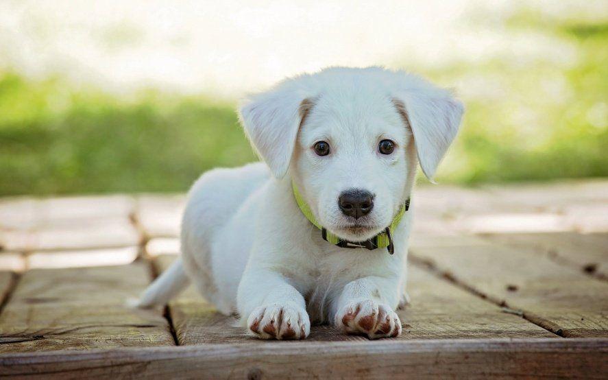 Llega una nueva jornada de vacunación y desparasitación gratuita para mascotas a La Plata