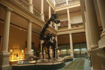 El Museo de La Plata cumple 132 años este 19 de noviembre