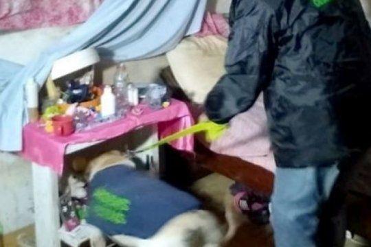 linda, la perra de la policia que fue clave para detener a dos dealers en quilmes