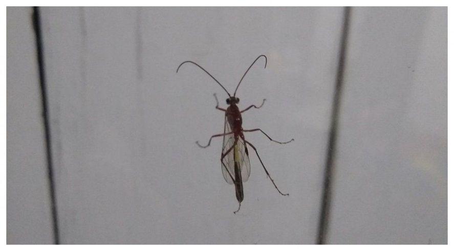 La aparición de estos insectos alarmó a los vecinos de Bahía Blanca