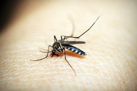 Científicas de la UNLP estudian la coinfección simultánea con dengue y coronavirus